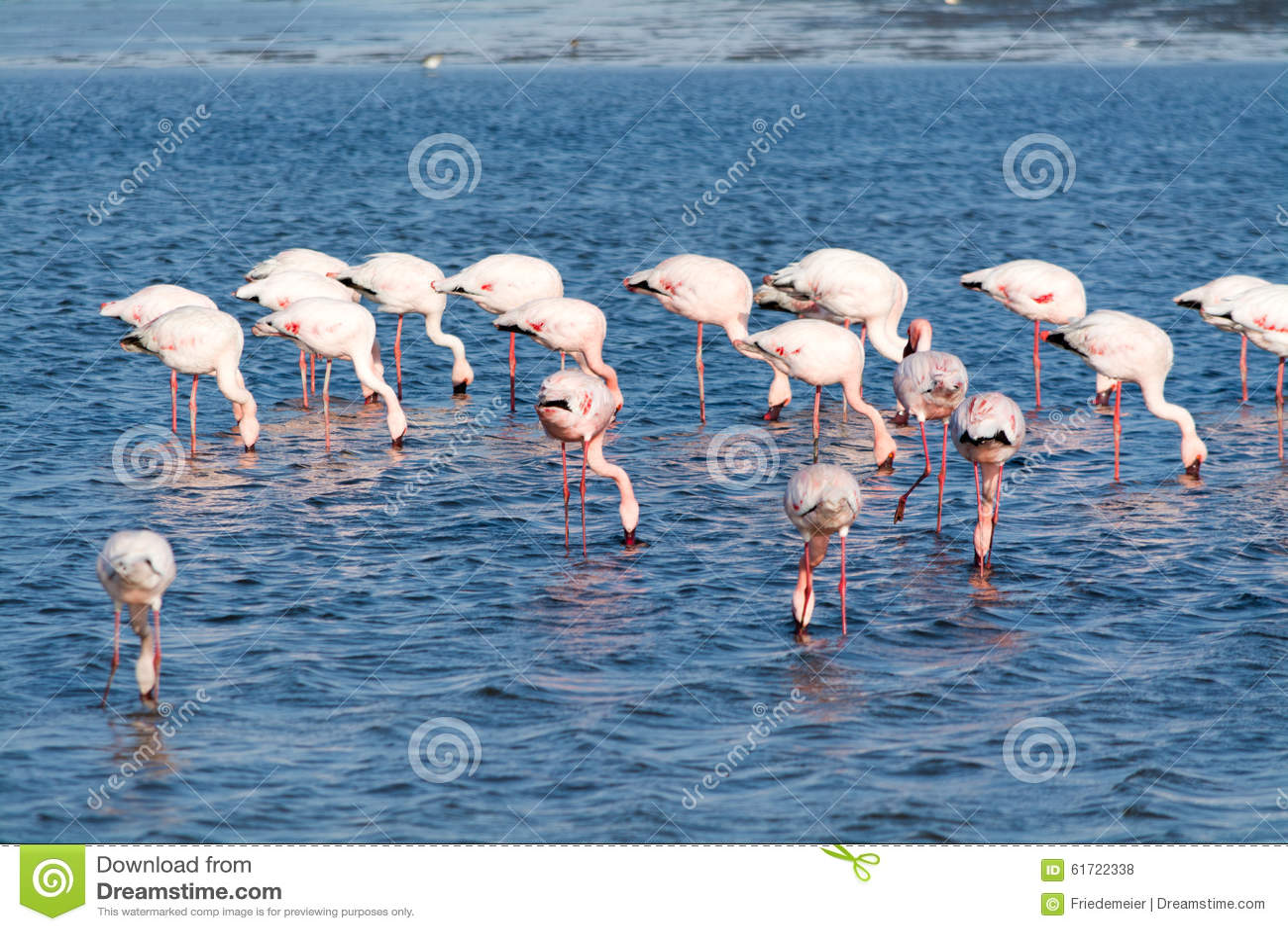 Flamingos In The Ocean Near Swakopmund. Royalty-Free Stock ...