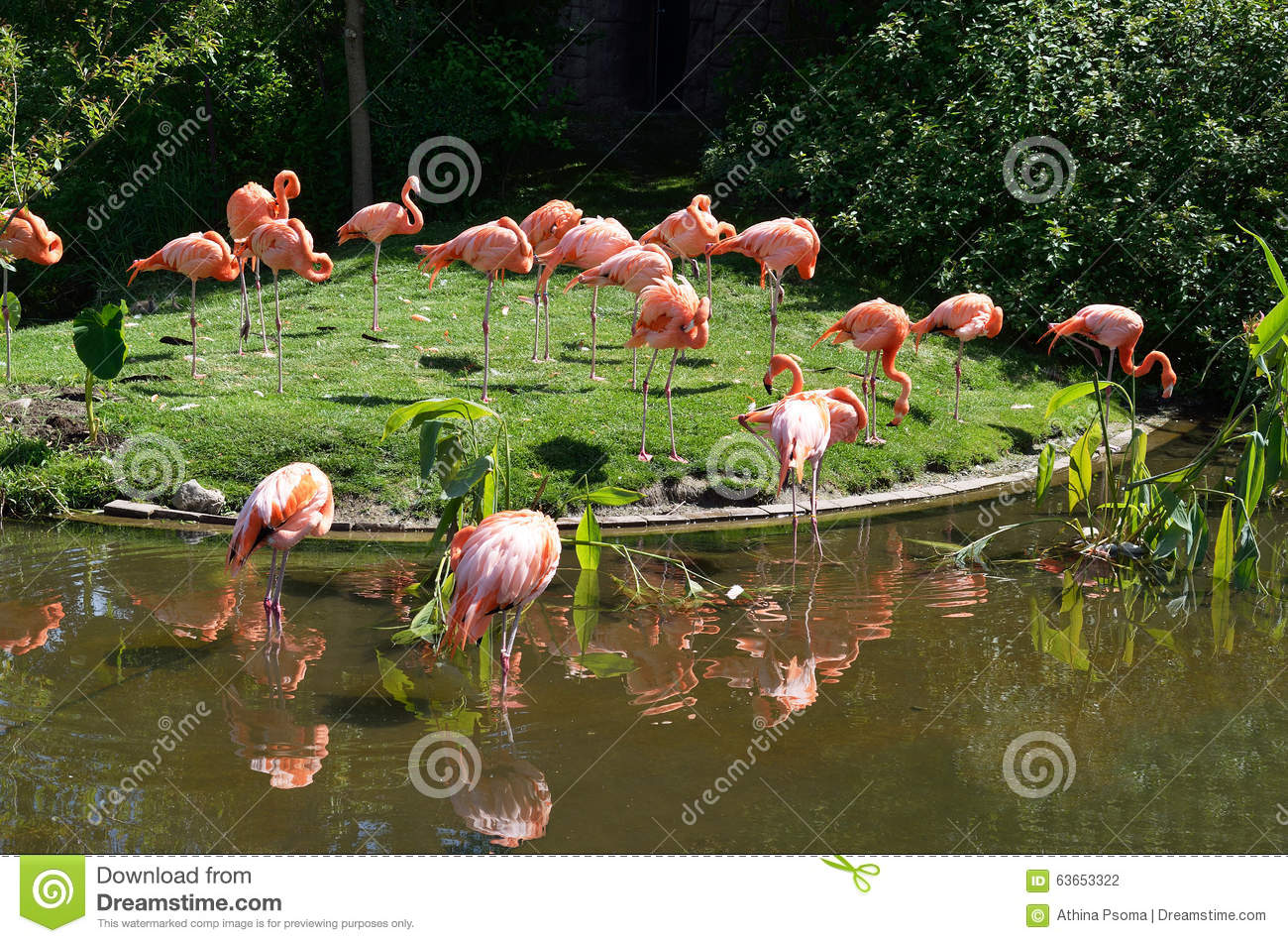 Flamingos stock photo image 63653322 for Artificial water pond