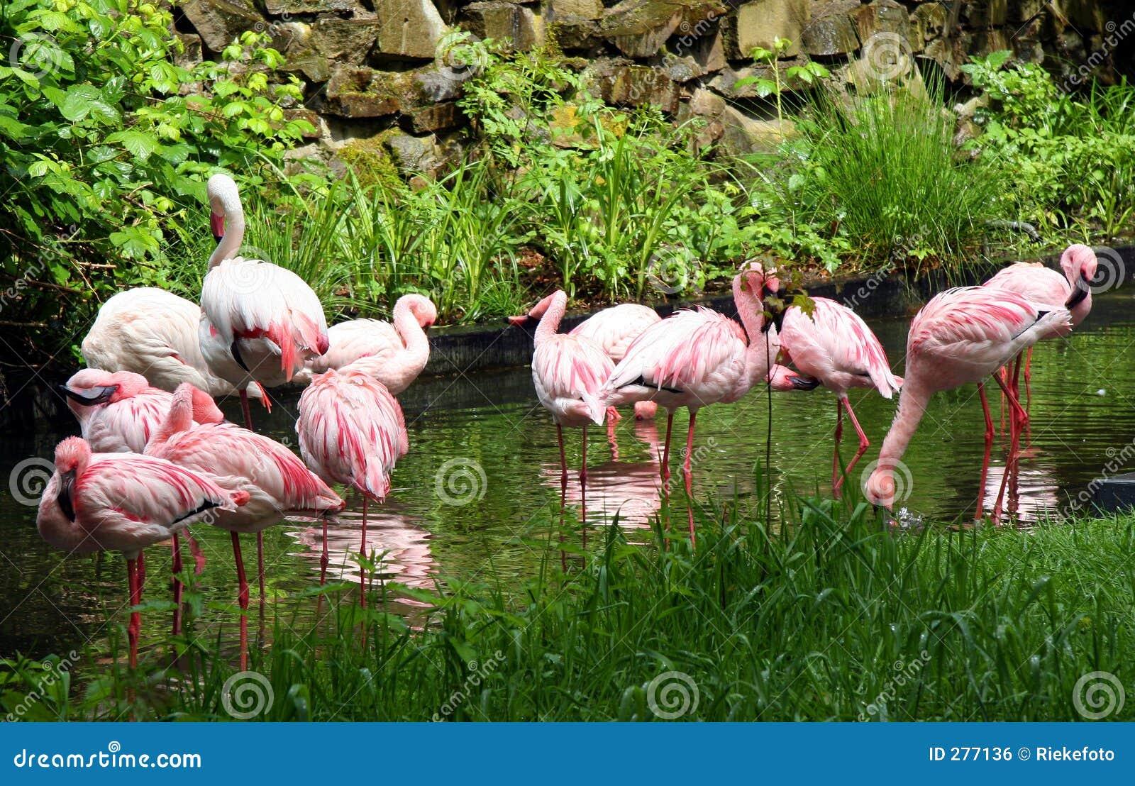 Flamingospink