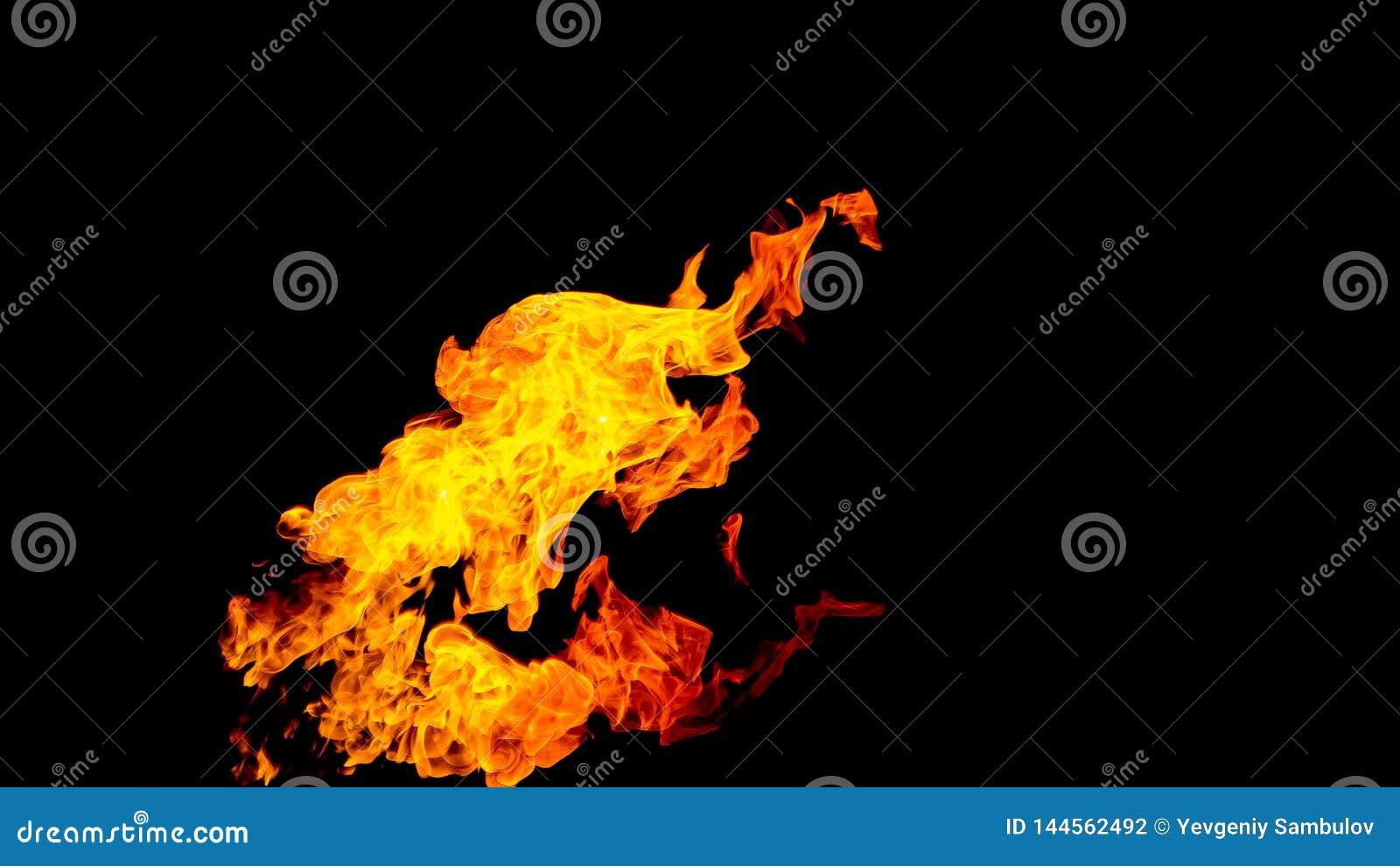 Flammes d incendie sur le fond noir le feu sur le fond noir d isolement Modèles du feu