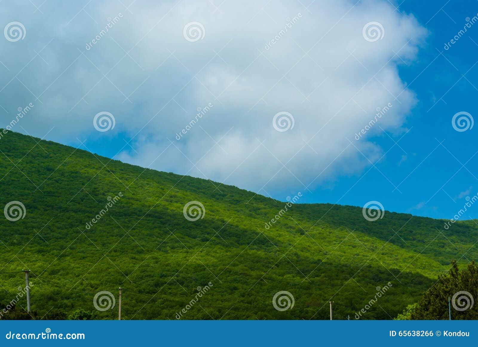 Flanc de coteau vert un jour d été