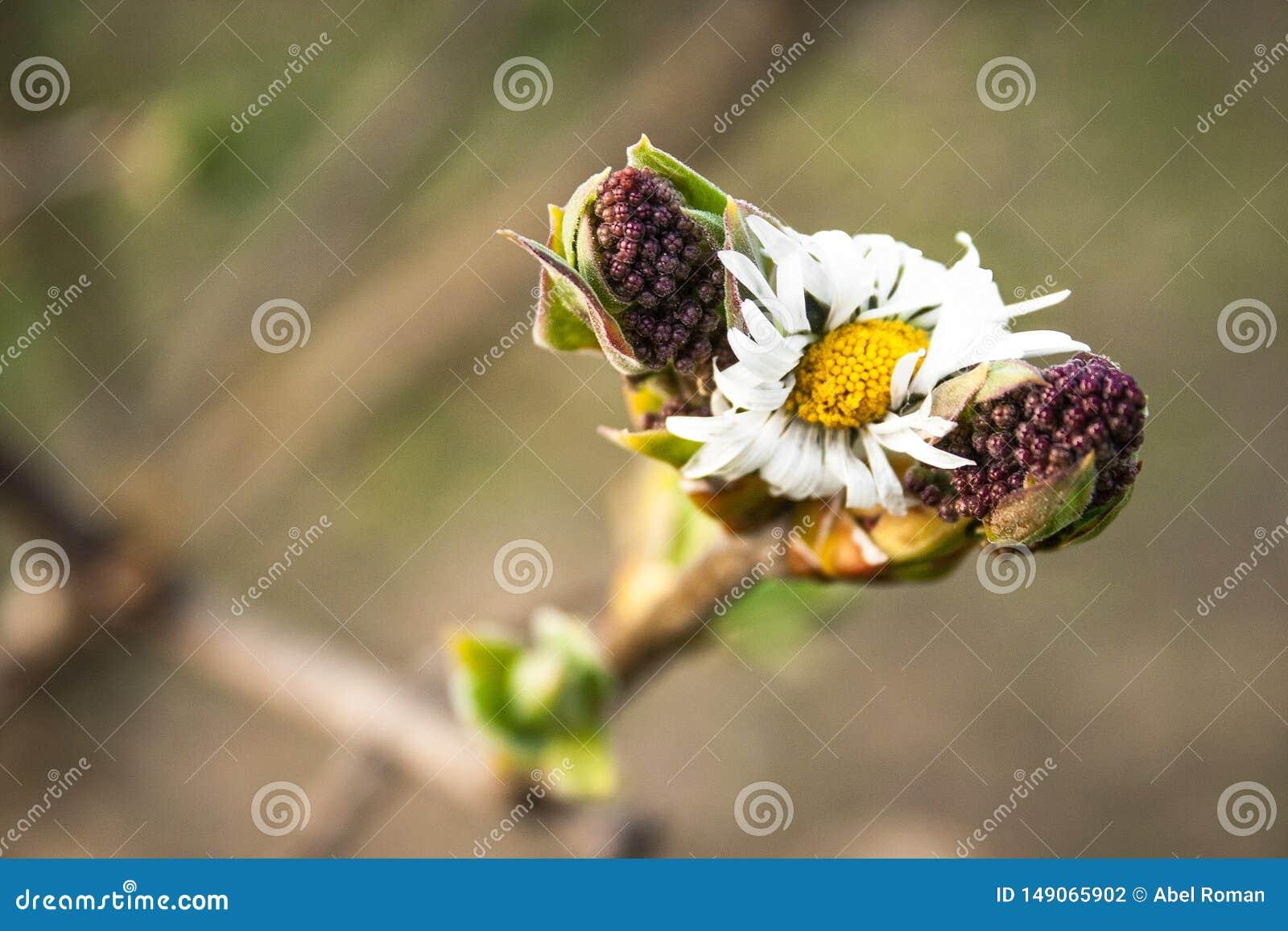 Flanca gałąź z owoc na ich końcówkach