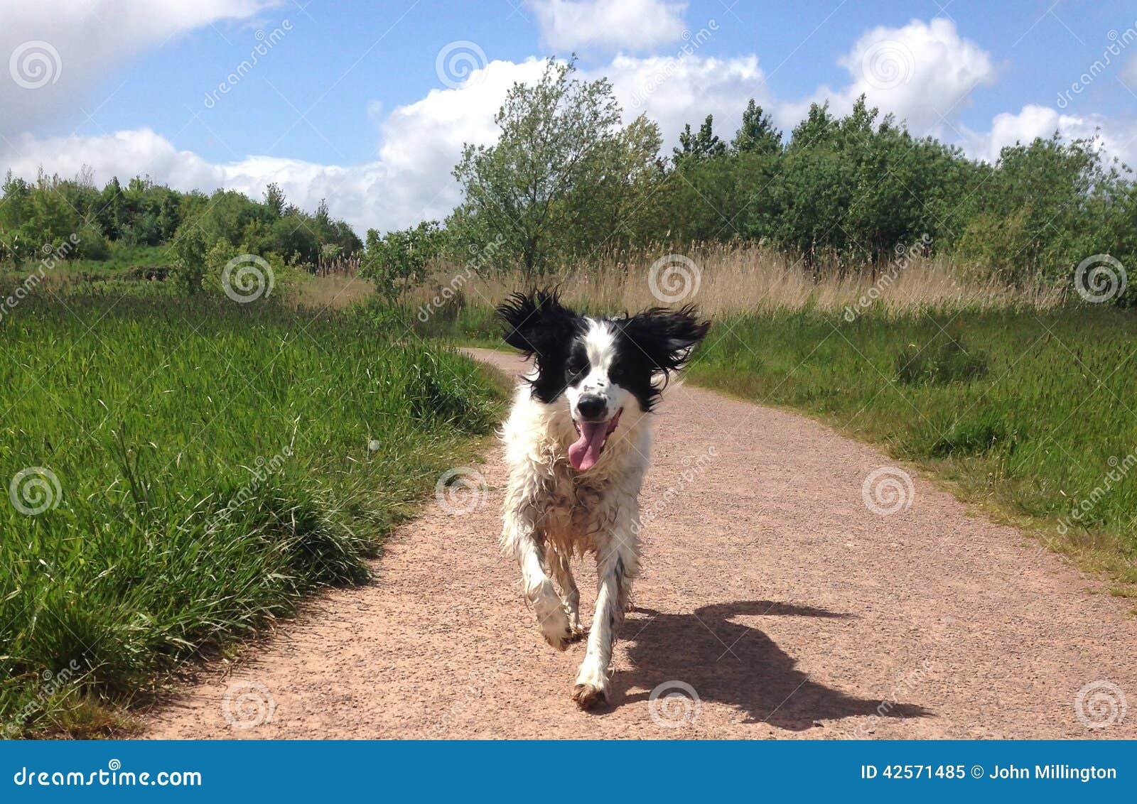 English Landing Dog Park