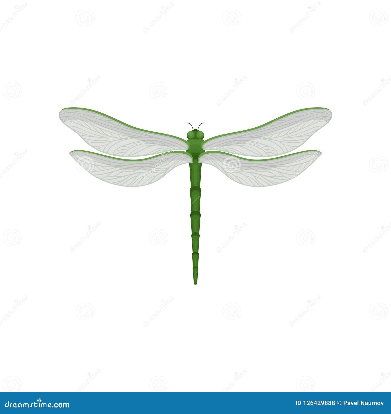 Flar vektorsymbol av den härliga sländan med kroppen för lång gräsplan och två par av stora genomskinliga vingar Snabb-flyg