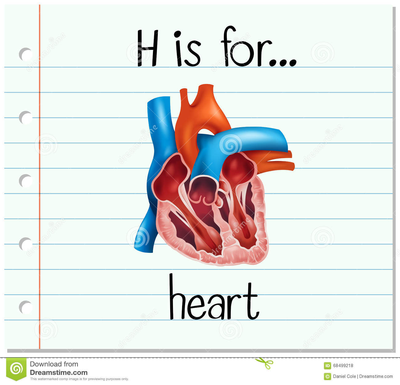 Flashcard Letter H Is For Heart Stock Vector Illustration Of Flash