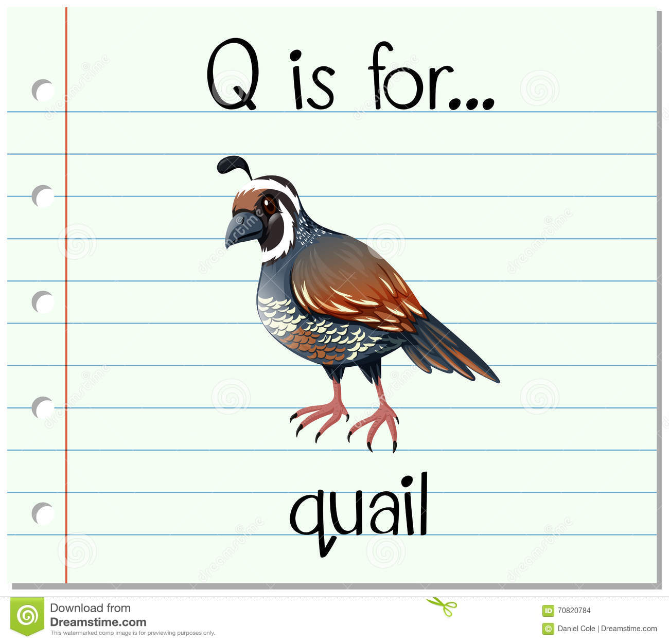 Q Is For Quail Flashcard Letter Q Is ...