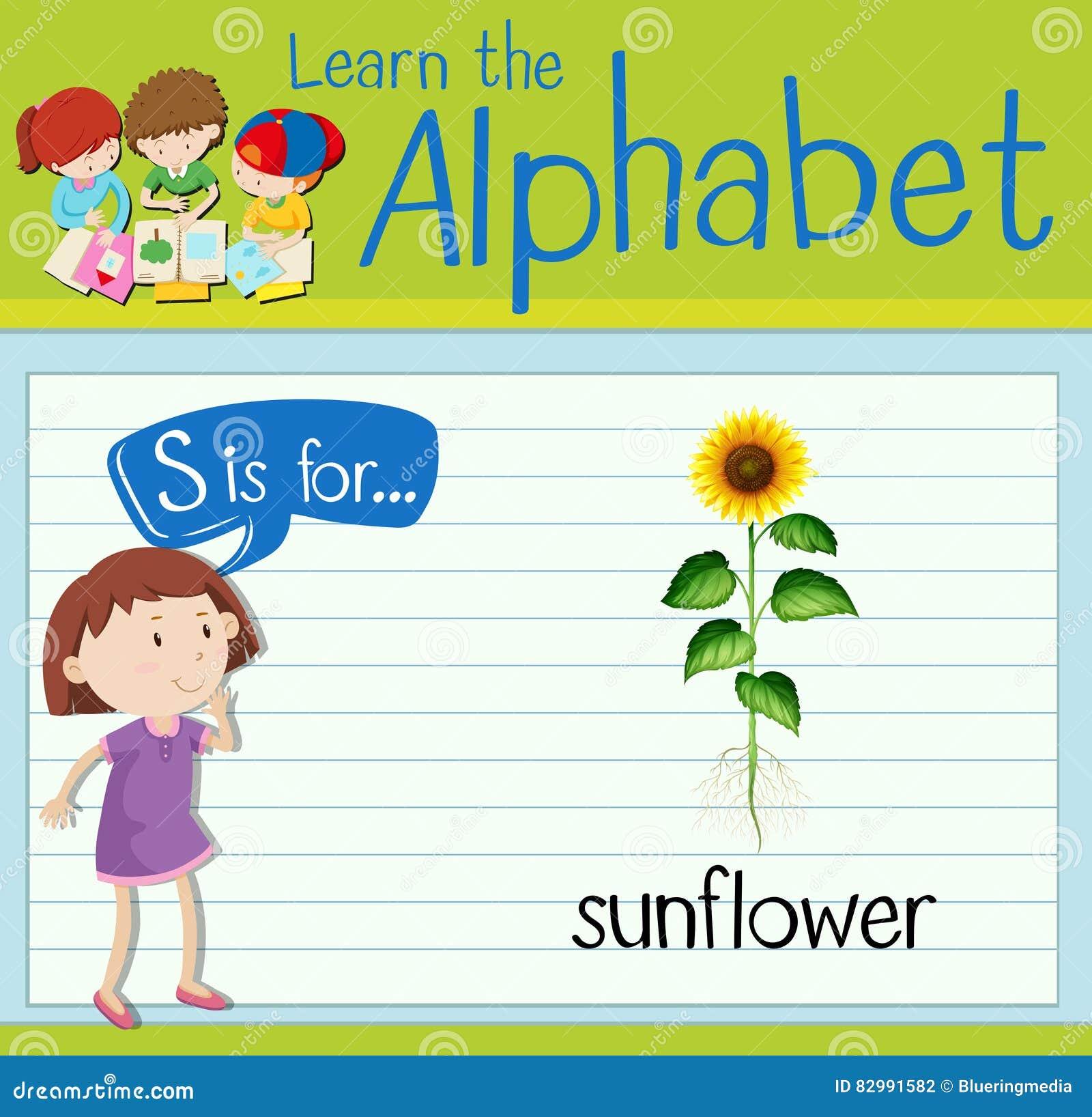 Flashcard Letter S Is For Sunflower Stock Illustration ...
