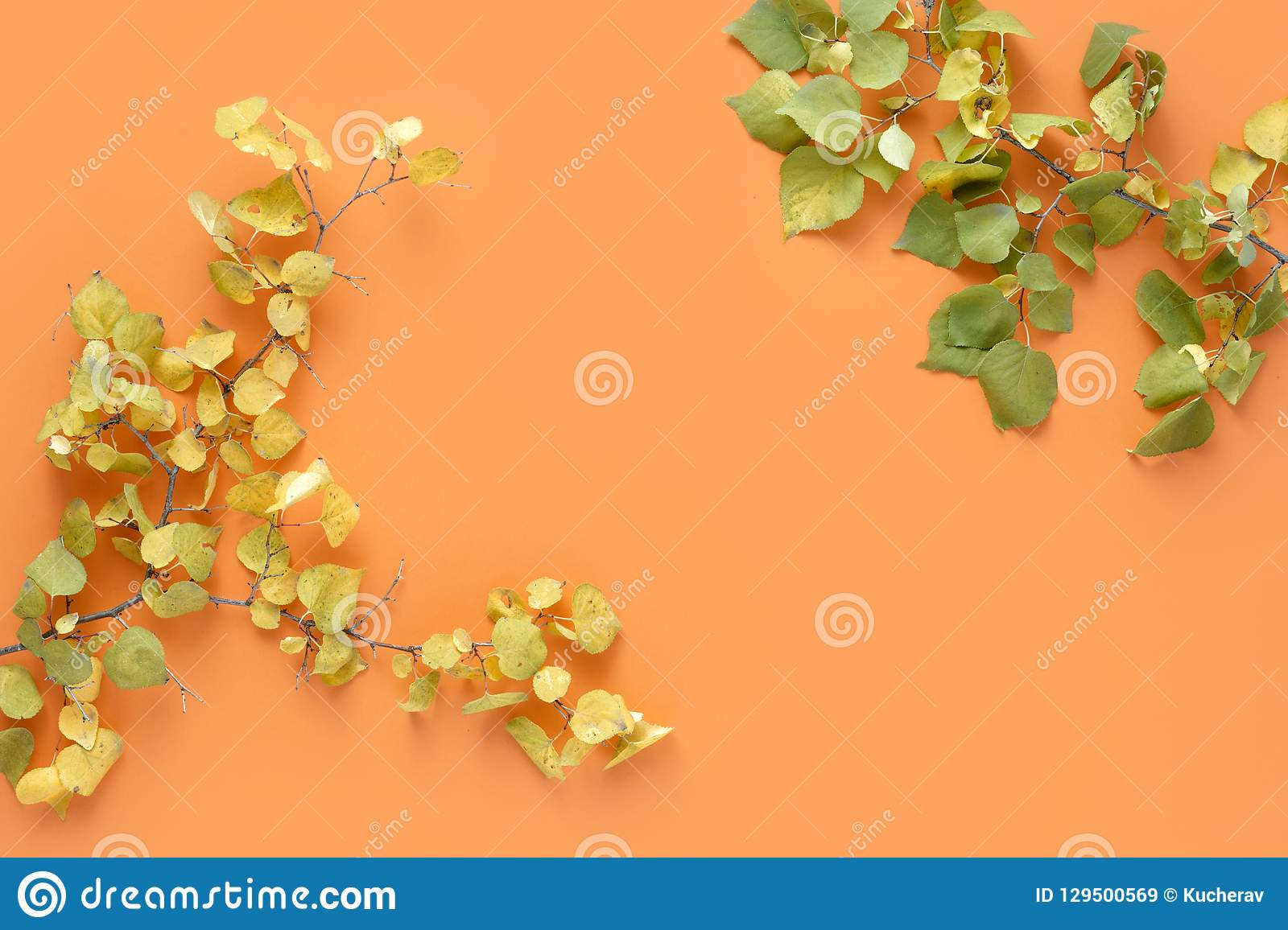 Flat lay colorful autumn leaves orange background Autumn fall top view