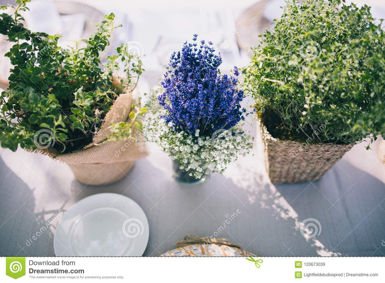 flat lay with green plants and lavender plant in flowerpots on tabletop