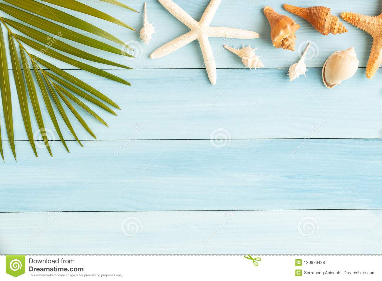 Flat lay photo coconut leaf and seashell on wood background , summer concept top view and copy space for montage your product