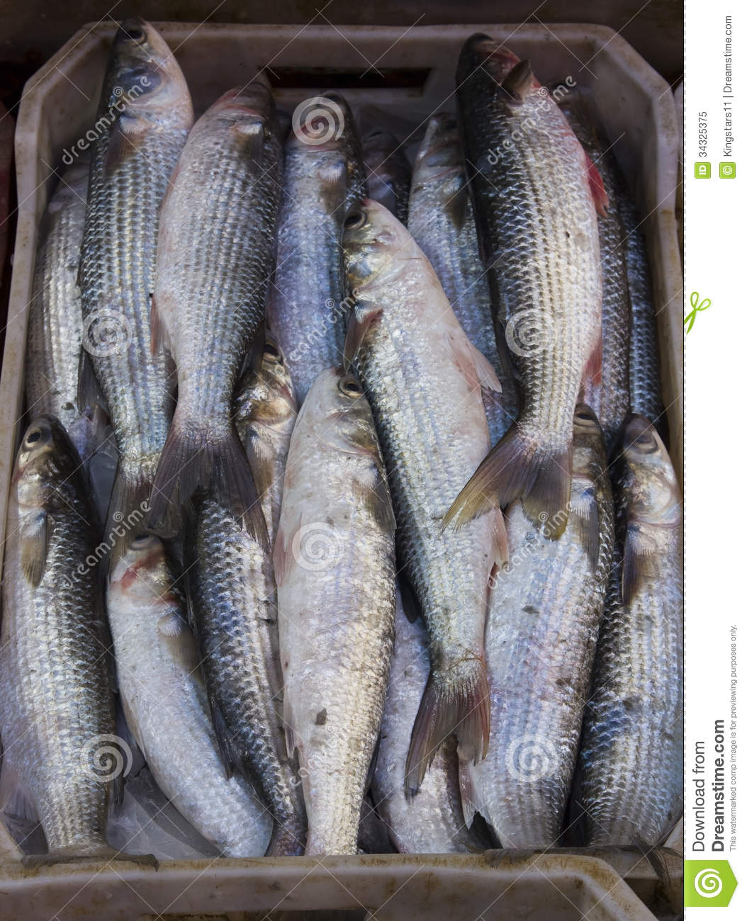 Flathead mullet fish stock image image of healthy marine for Eating mullet fish