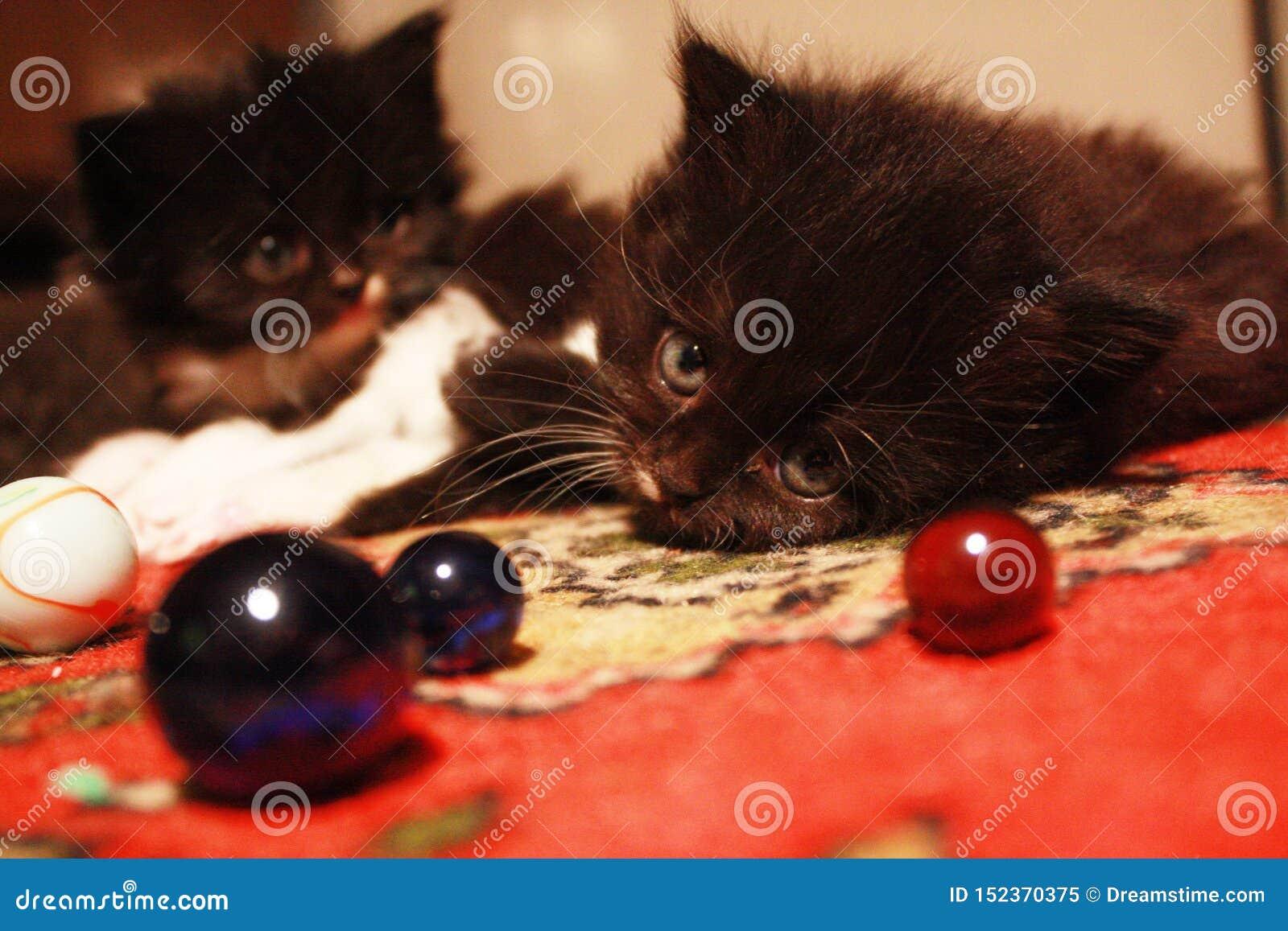 Flaumige Kätzchen und Glaskugeln