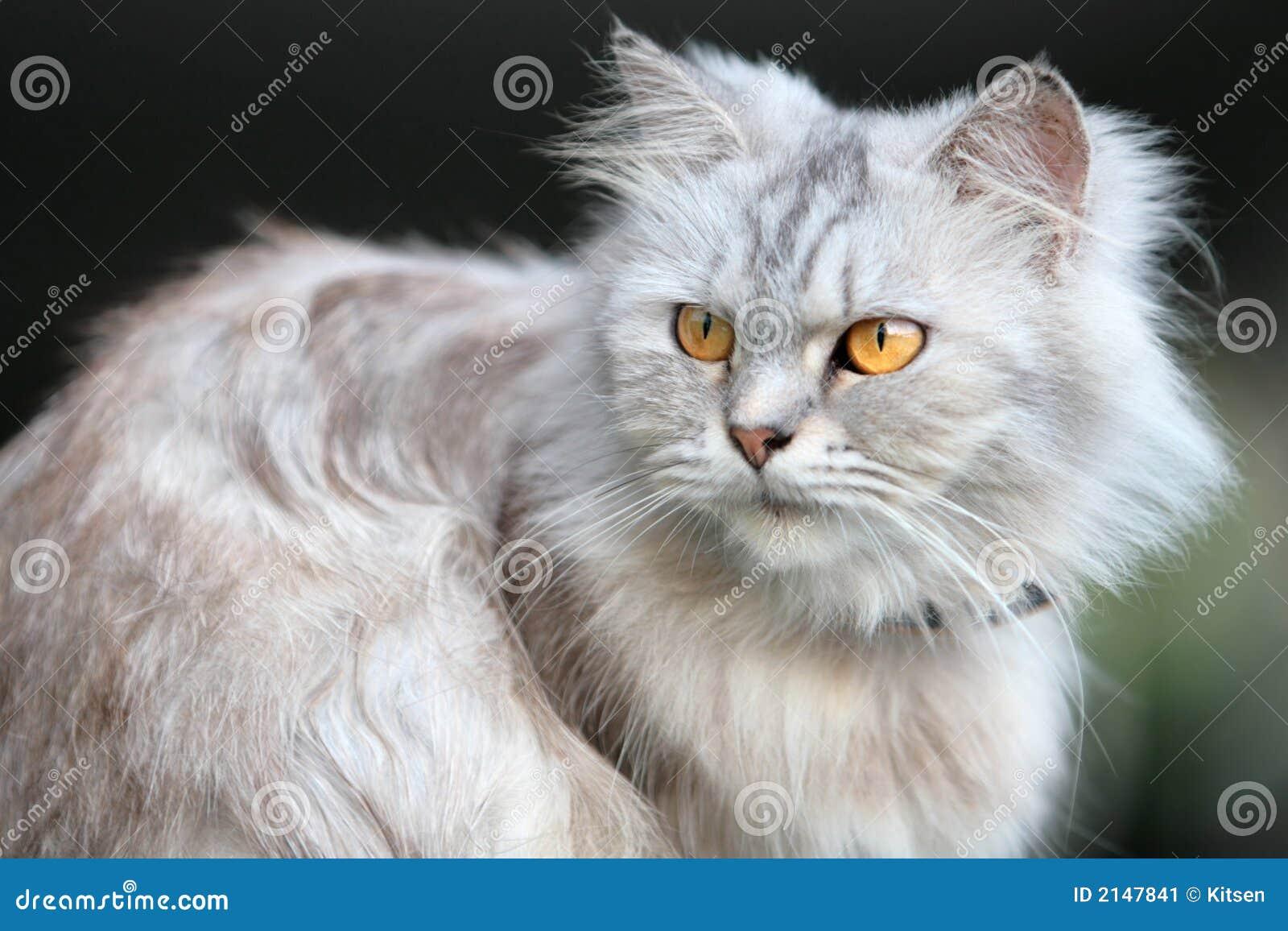 Flaumige Katze