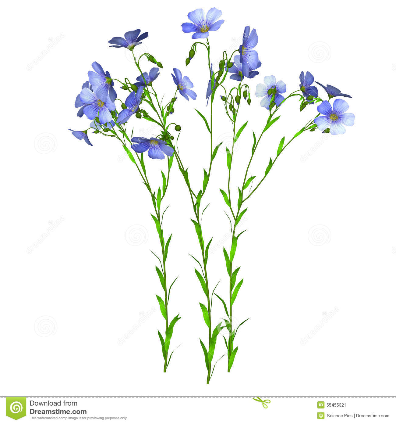 Flax Plant Stock Illustration - Image: 55455321