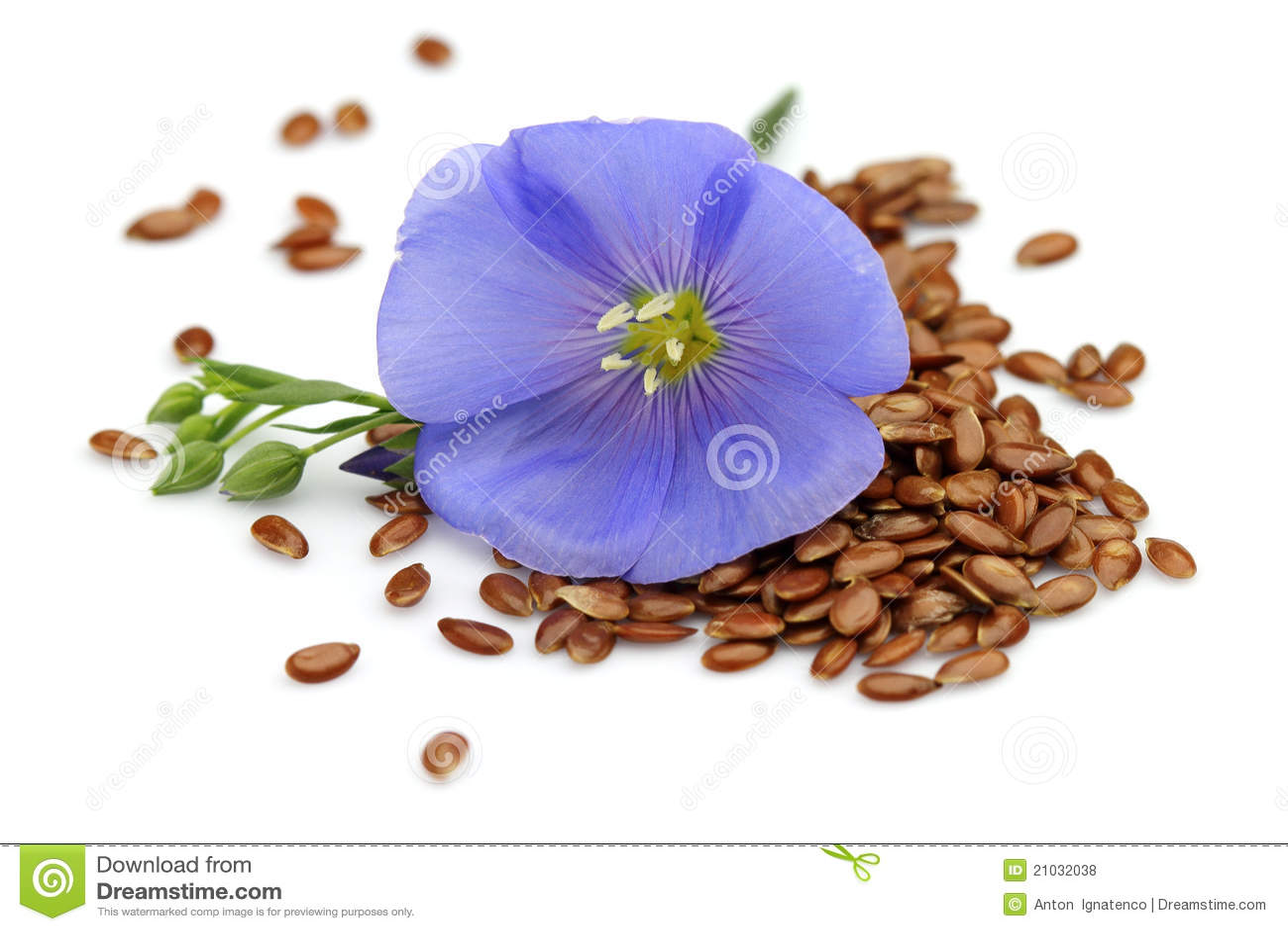 Семена цветов рисунки
