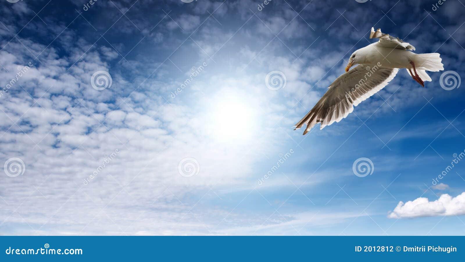 Flaying чайка