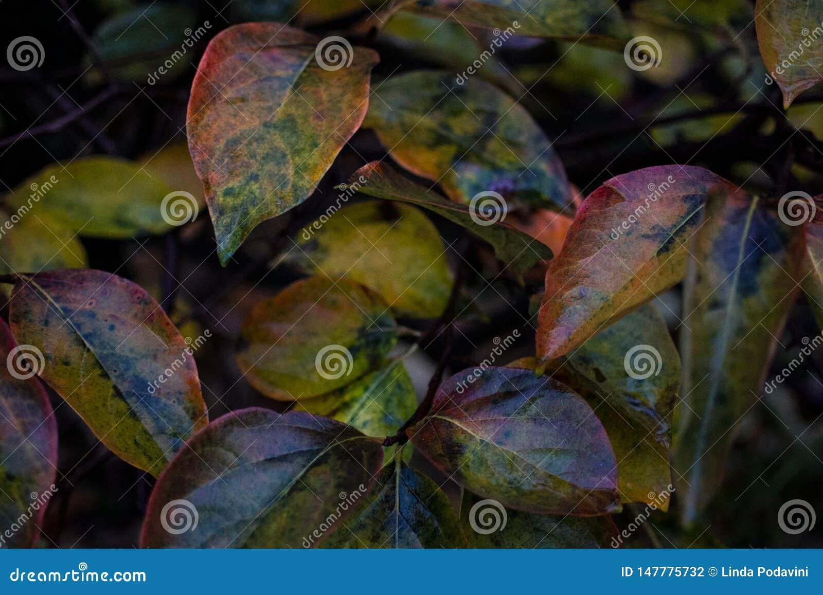 Flerfärgade sidor som tänds av November regn