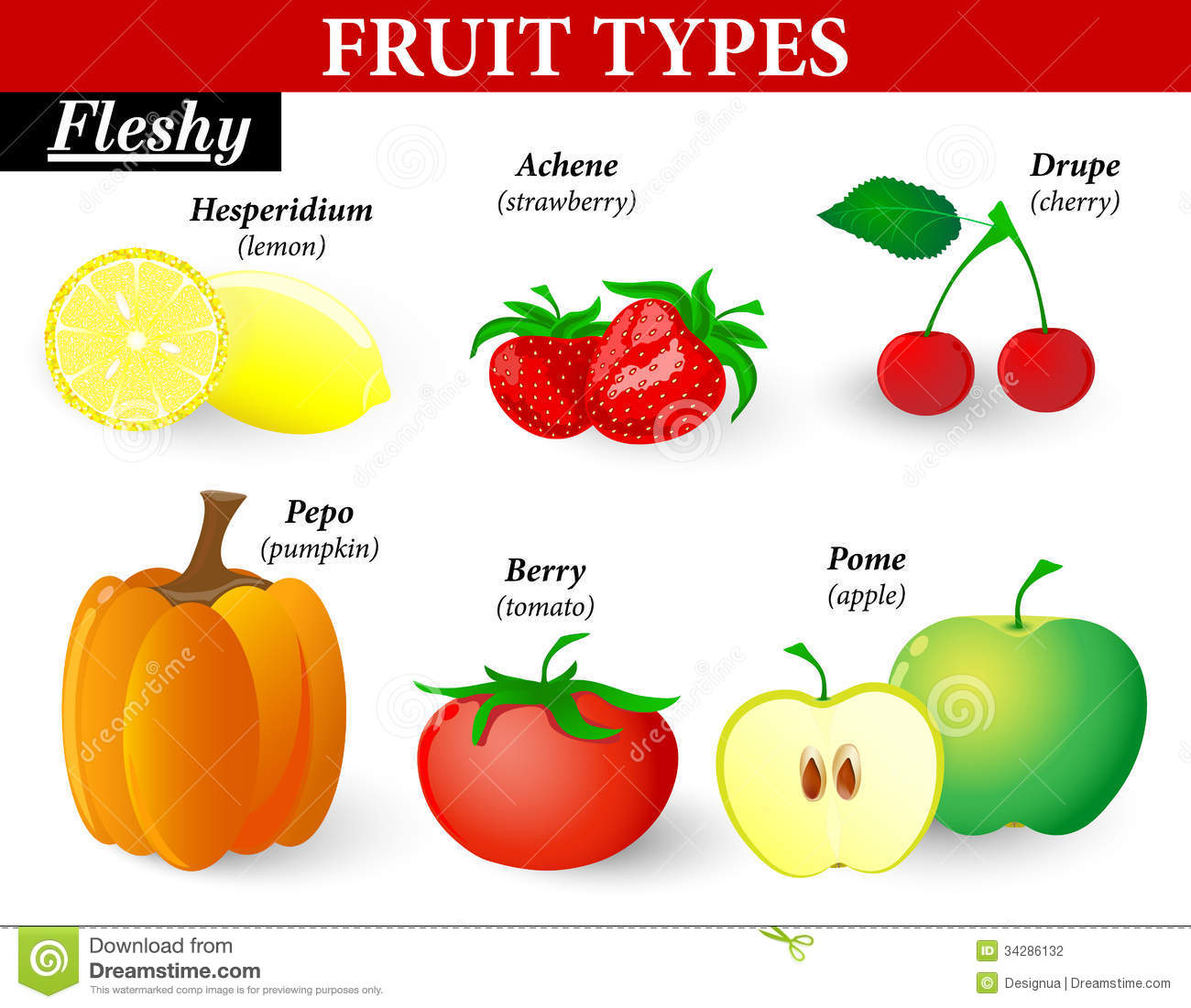 Common Types Of Fruits And Seeds. Vector Illustrat Royalty Free ...