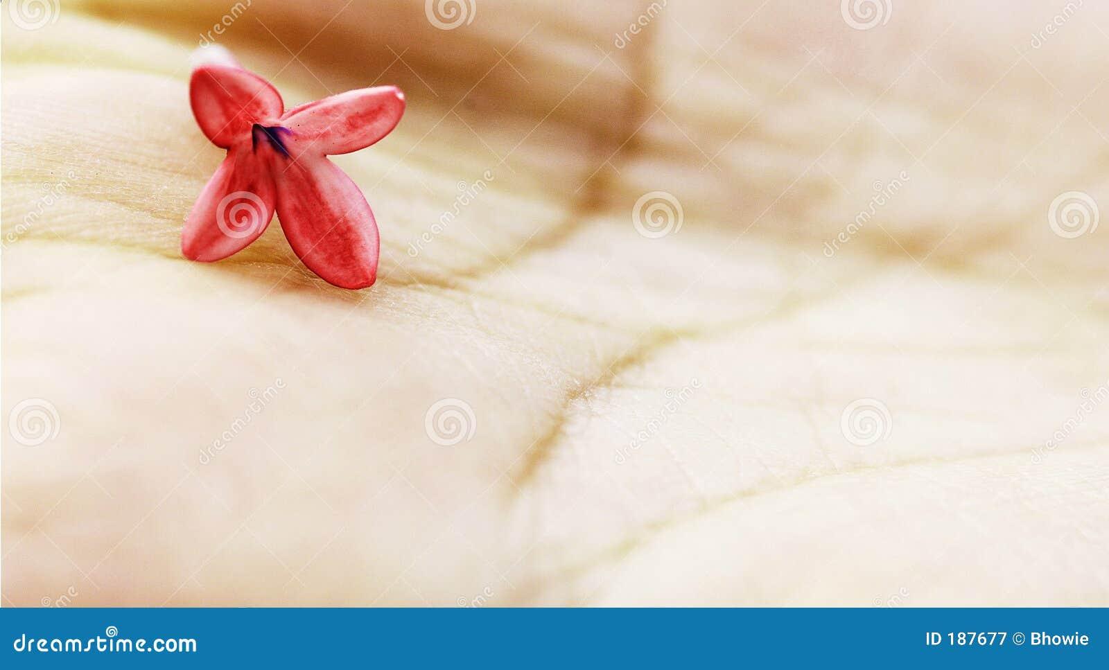Fleur à disposition