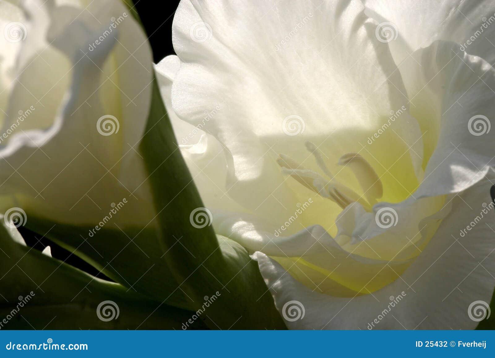 Fleur abstraite 2