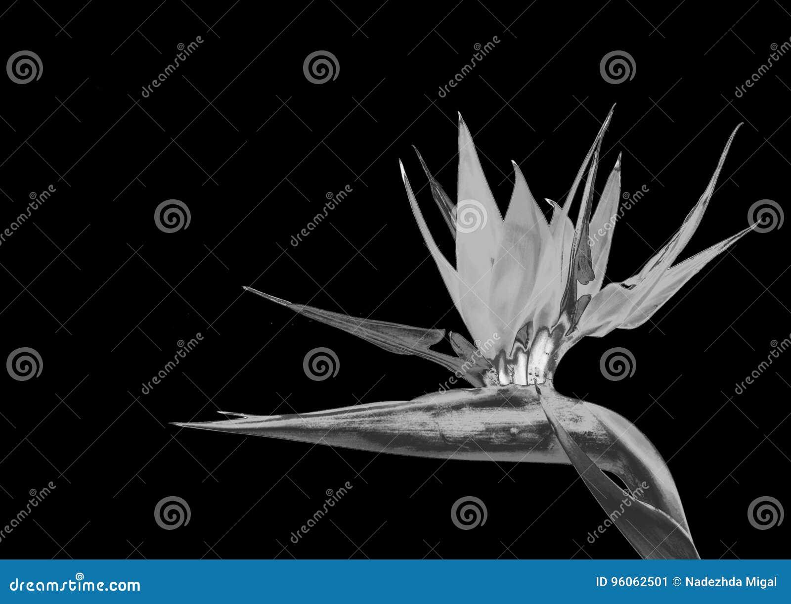 Fleur argentée
