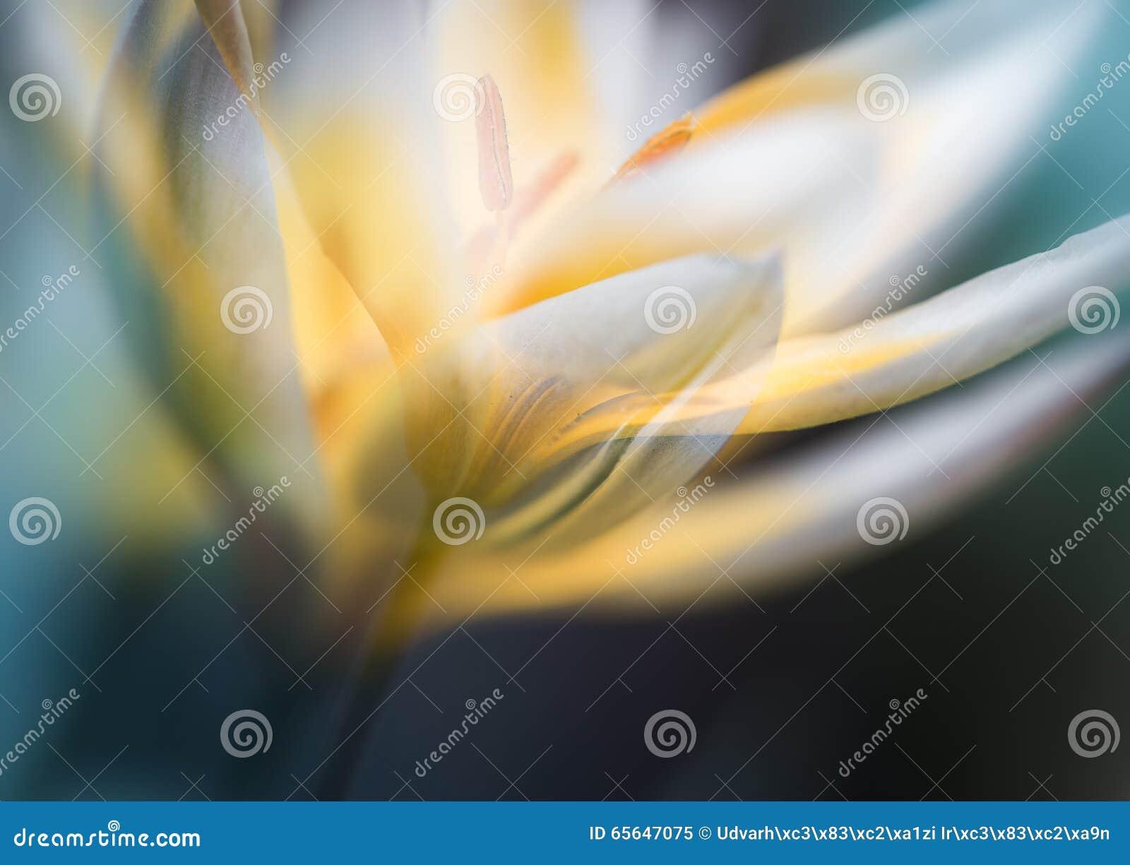 Fleur blanche avec le multiexpo