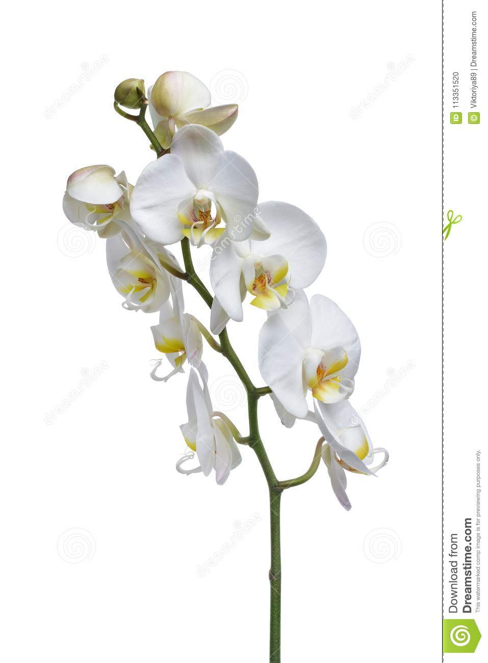 Fleur Blanche D Orchidee D Usine D Interieur Photo Stock Image Du