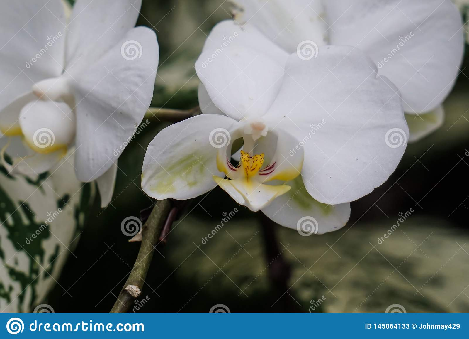 Fleur blanche dans la forêt tropicale
