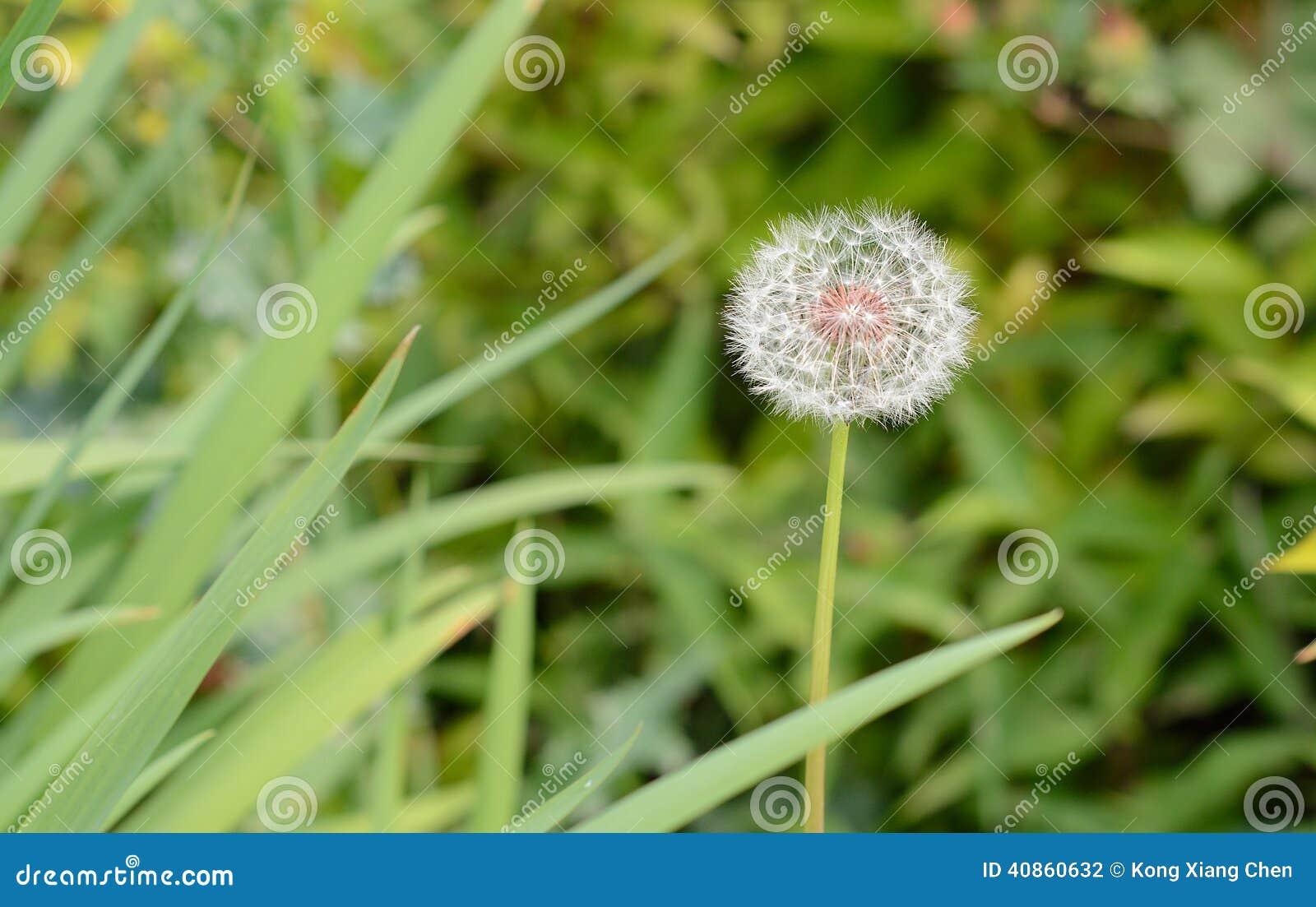 Fleur Blanche De Boule Photo Stock Image Du Bille Couches 40860632