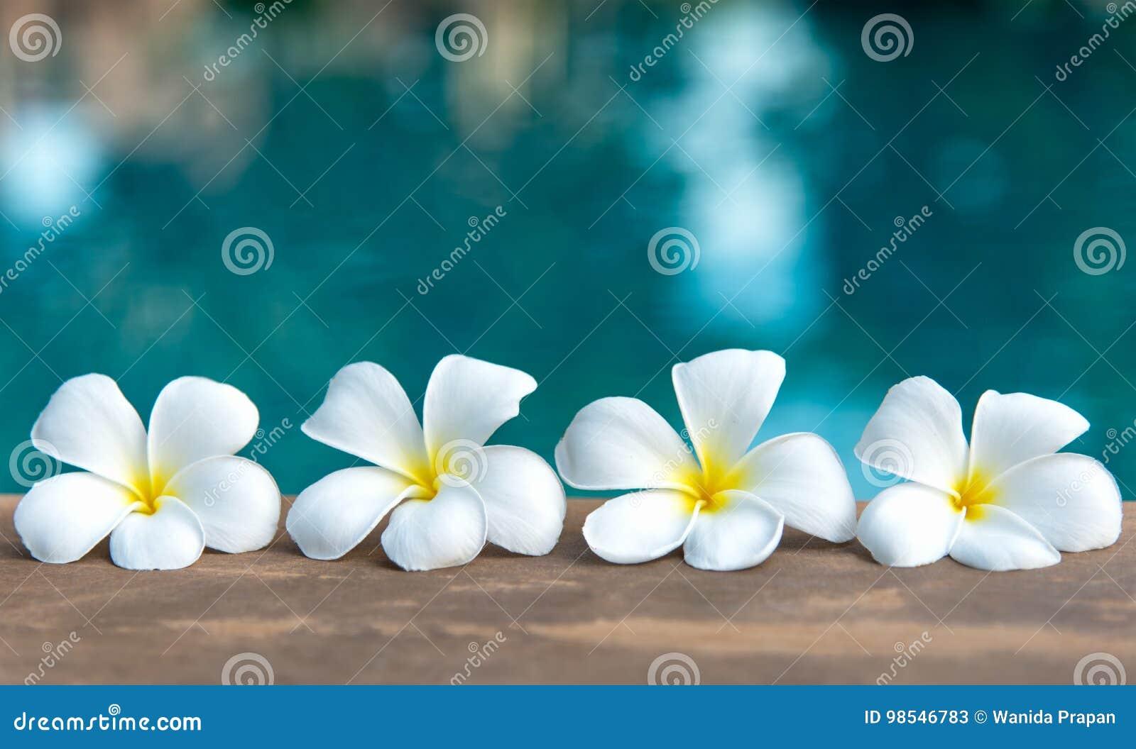 Fleur Blanche De Frangipani Tropical Pres De La Piscine Station
