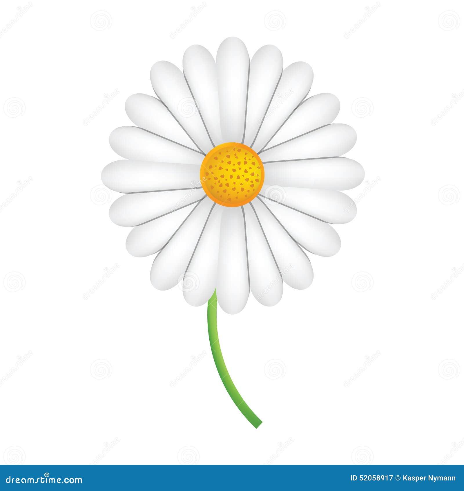 Fleur blanche de marguerite des pr s sur une tige verte illustration stock - Fleur blanche longue tige ...