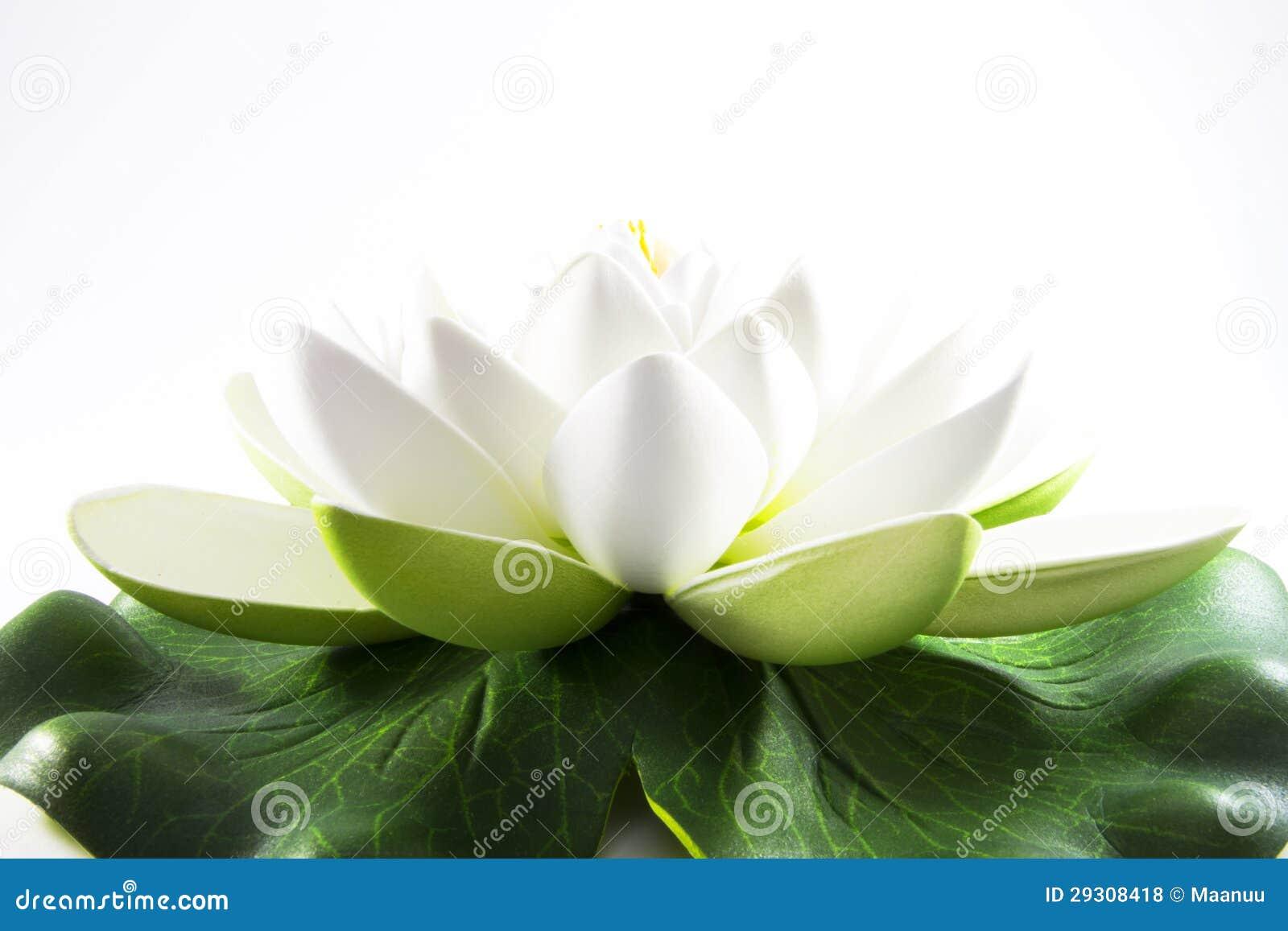 Fleur blanche de zen