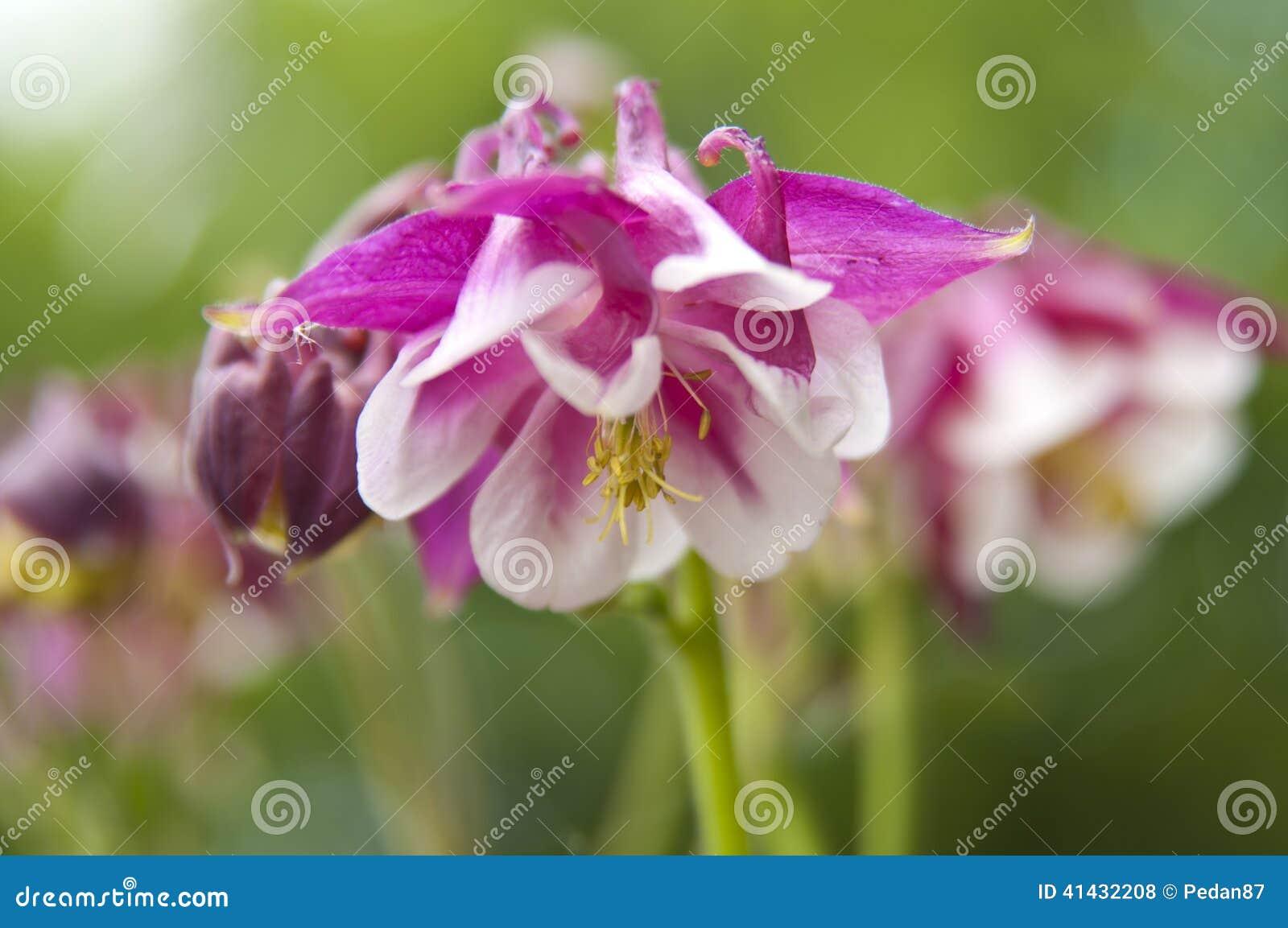 fleur blanche rose | la pilounette