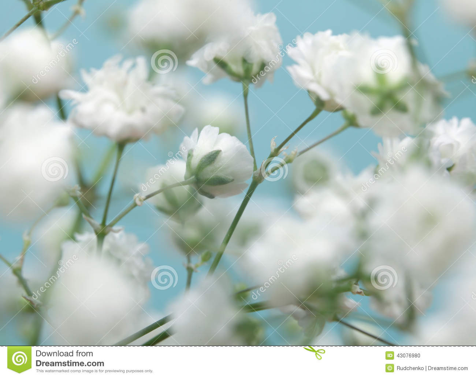 fleur blanche sur le fond bleu photo stock image du fond fleur 43076980. Black Bedroom Furniture Sets. Home Design Ideas