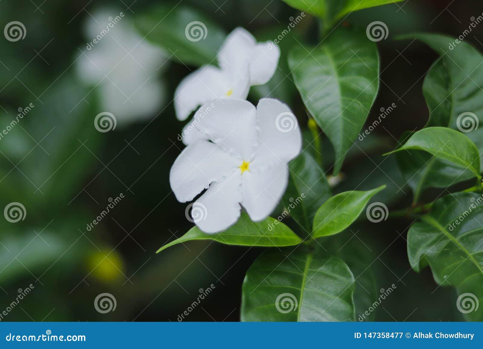 Fleur blanche sur le fond vert