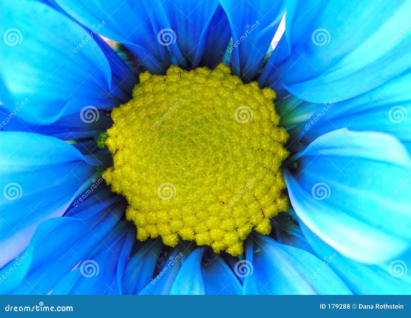 Fleur bleue et jaune