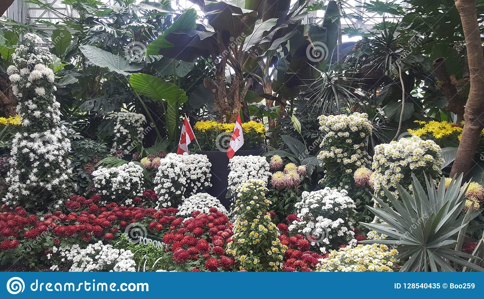 Fleur Canada Jardin En Octobre 2018 Image stock - Image du ...