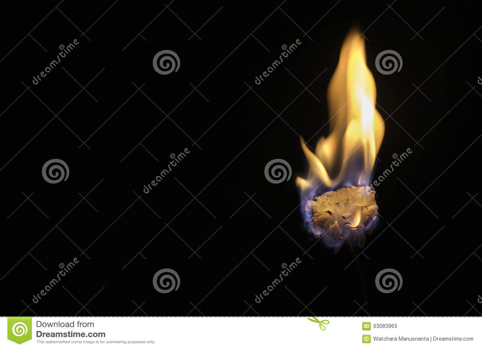 Download Fleur Chaude En Feu Sur Le Fond Noir Image stock - Image du fond, closeup: 63083963