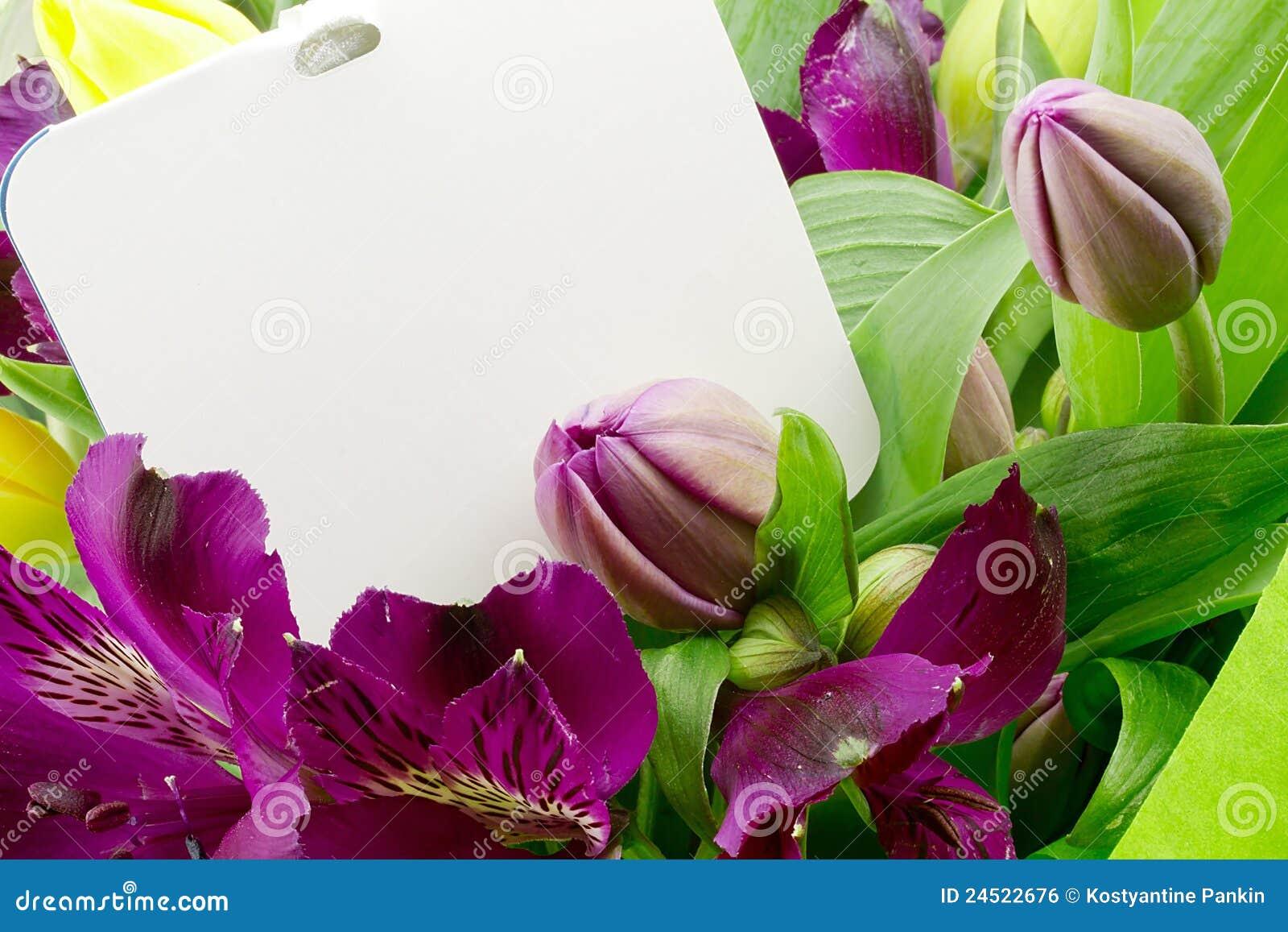Fleur d Alstroemeria