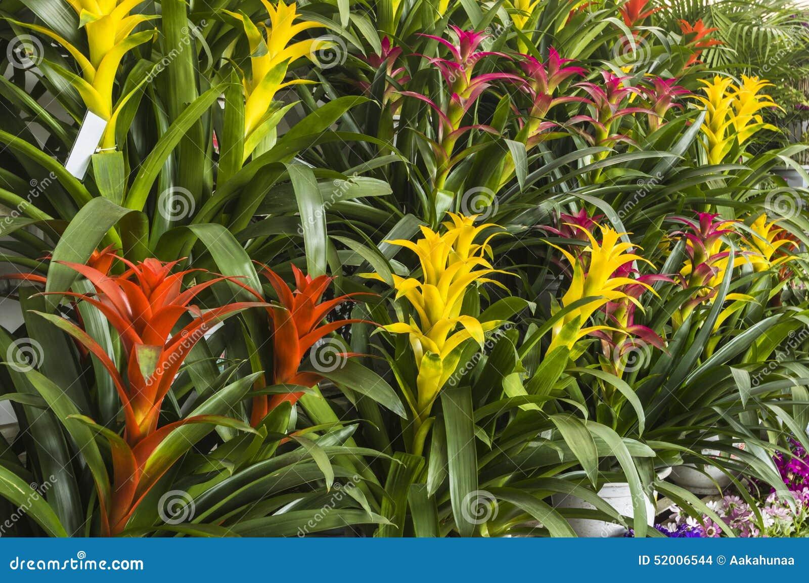 fleur d 39 ananas photo stock image du lumineux centrales. Black Bedroom Furniture Sets. Home Design Ideas