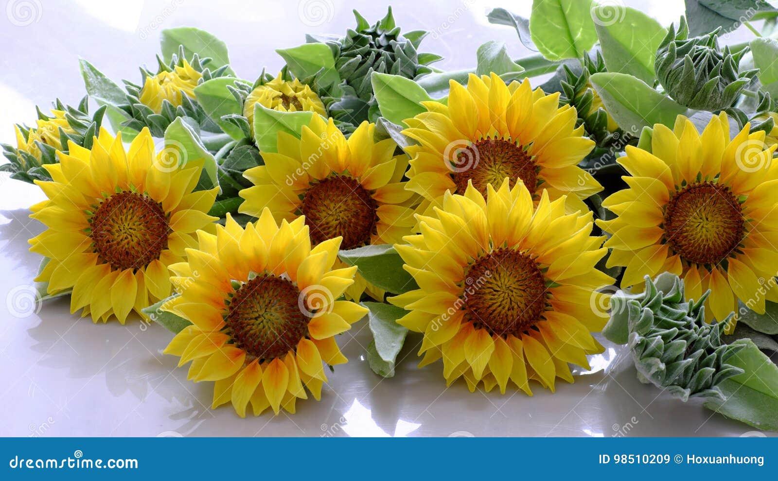 fleur d'argile, bouquet de tournesol image stock - image du métier