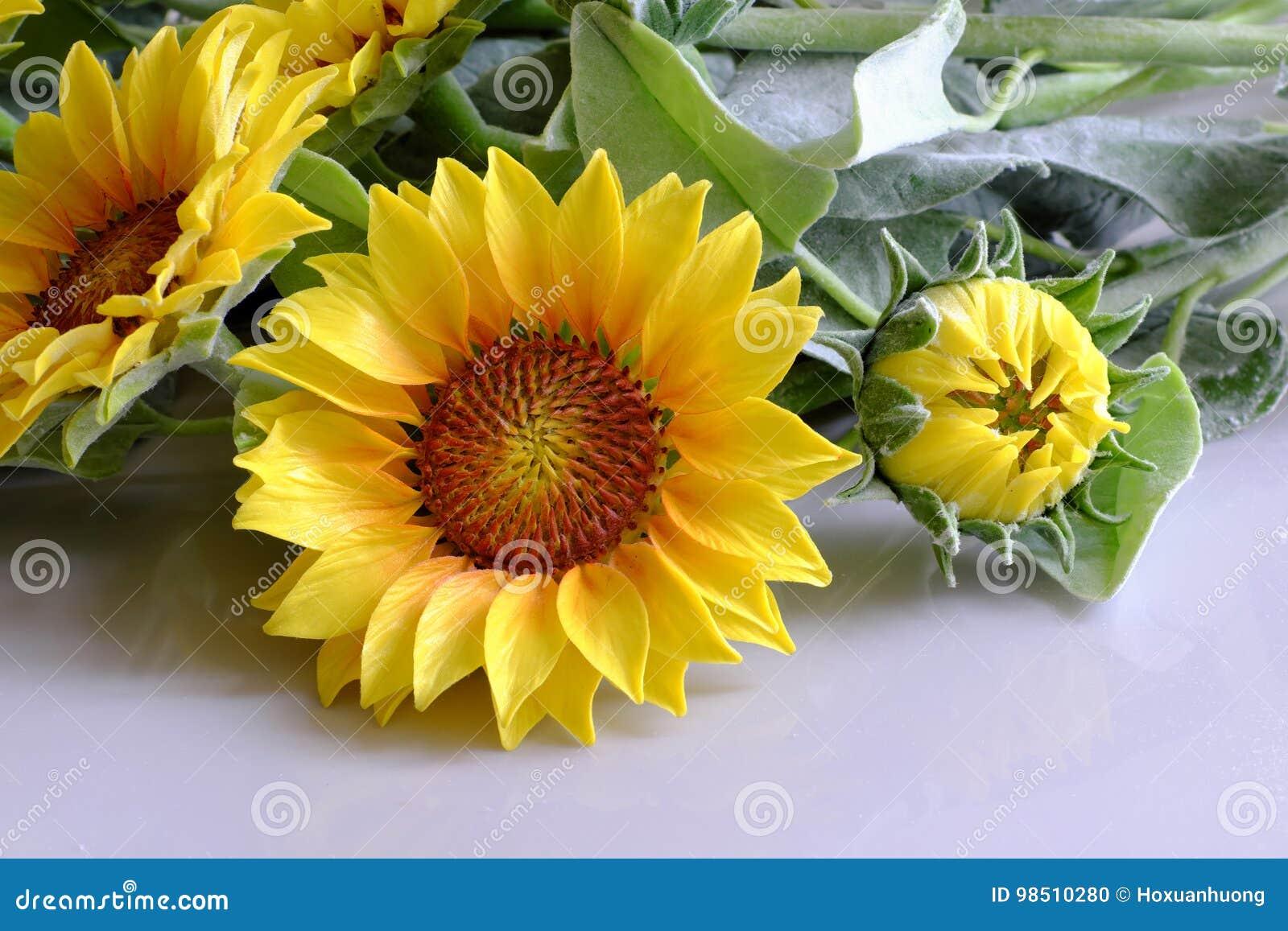 fleur d'argile, bouquet de tournesol photo stock - image du fleurs