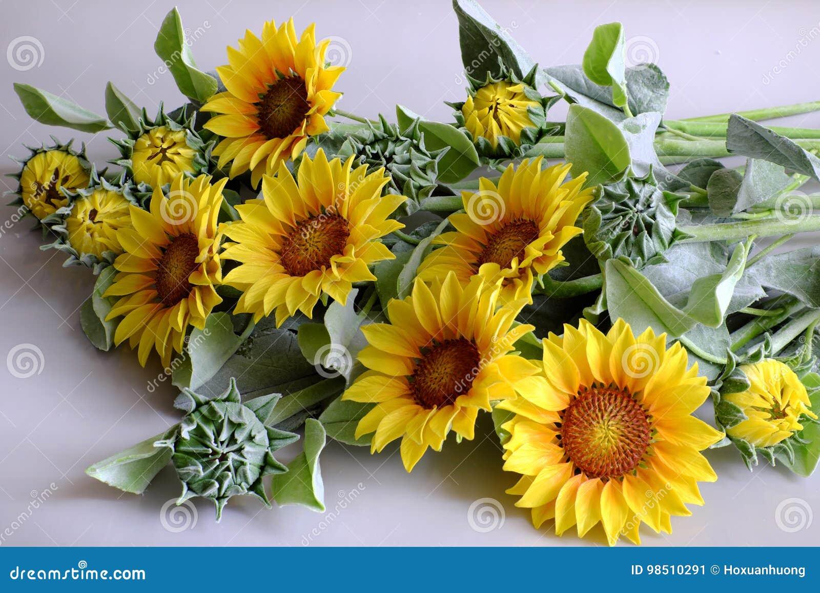fleur d'argile, bouquet de tournesol image stock - image du beau