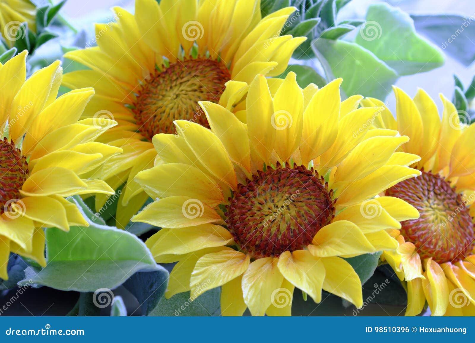 fleur d'argile, bouquet de tournesol photo stock - image du