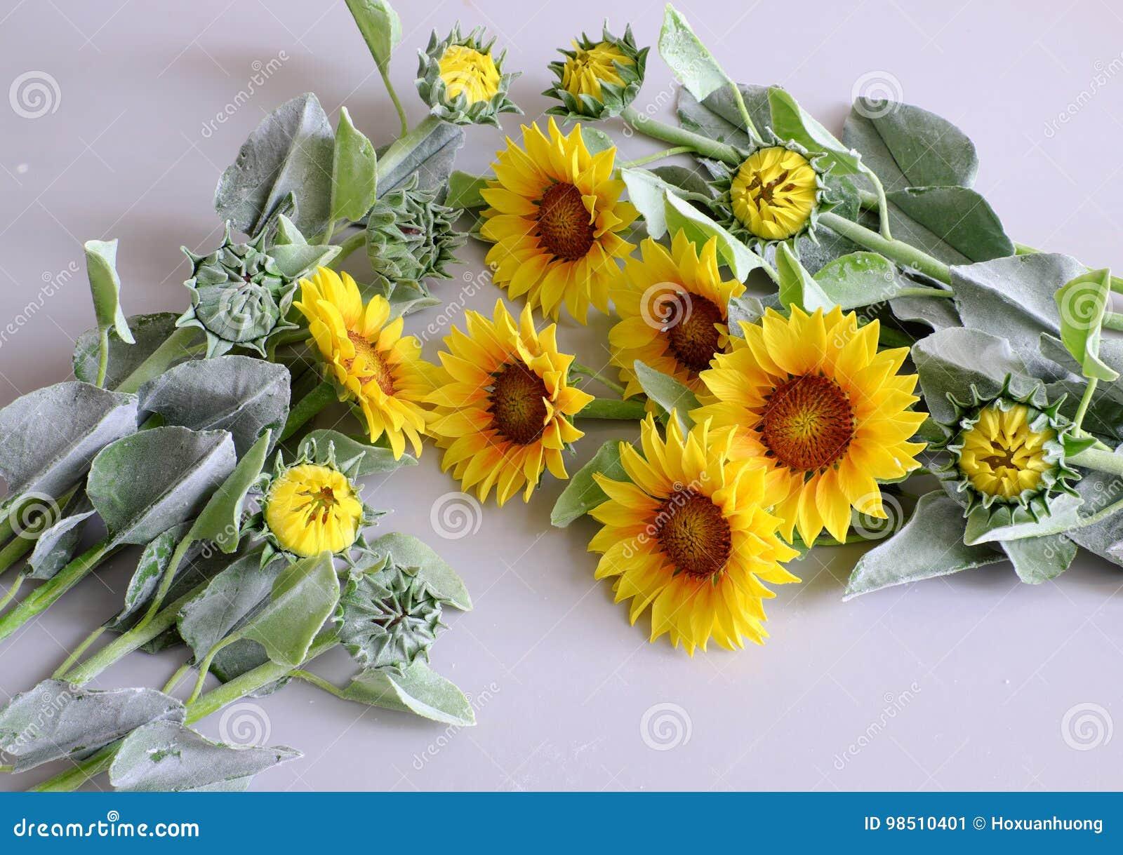 fleur d'argile, bouquet de tournesol image stock - image du