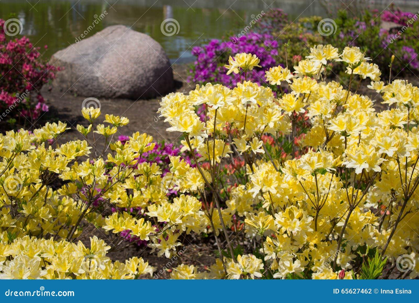 Fleur d azalée