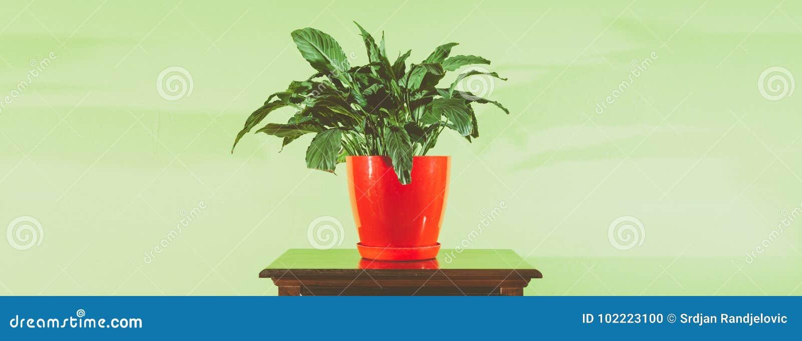 Fleur D Interieur De Decoration De Maison Dans Le Pot De Fleurs