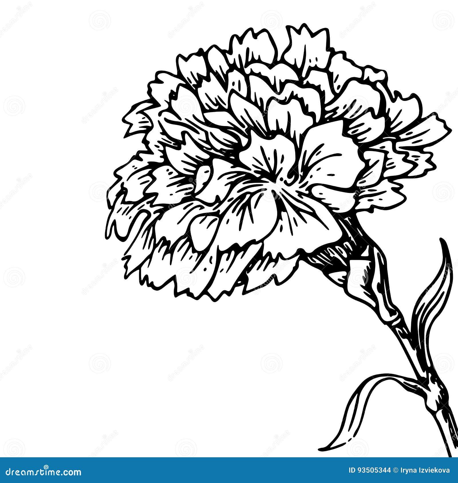 Tatouage Fleur Oeillet Idee D Image De Fleur