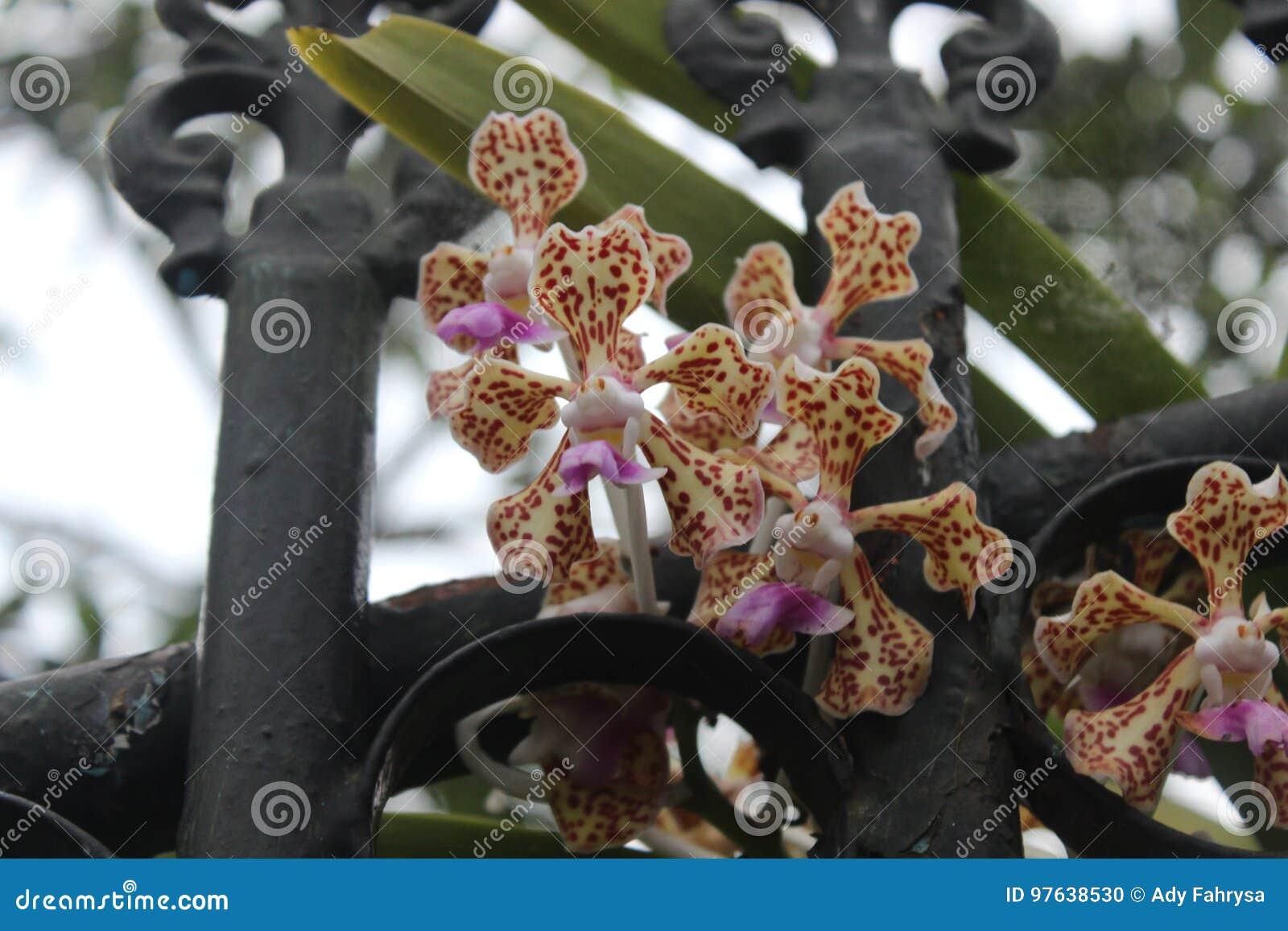 Fleur d orchidée