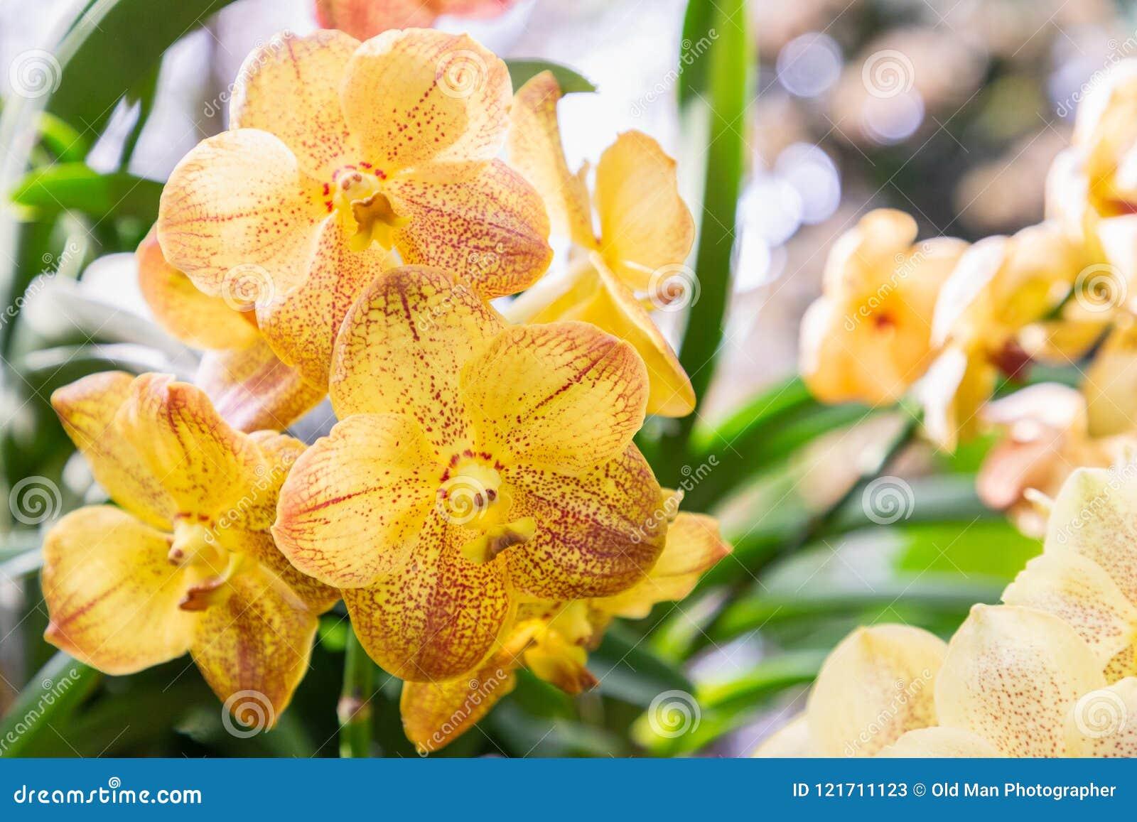 Fleur D\'orchidée Dans Le Jardin à L\'hiver Ou à La Journée De ...